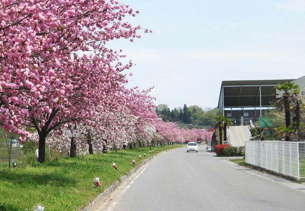 天竜峡桜街道